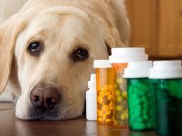 Resultado de imagem para venda fracionada de medicamento veterinário