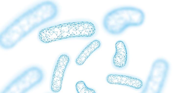 proteína do leite e probióticos